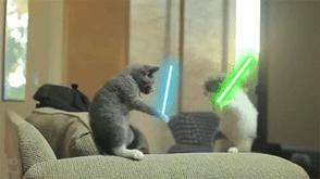 2 pisici cu sabie laser pe tik tok